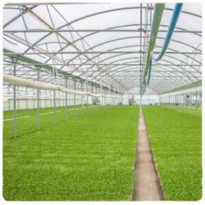 Γεωργικά Προϊόντα